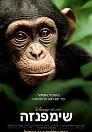 Chimpanzee - HD